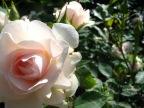 L'amour est dans les jardins