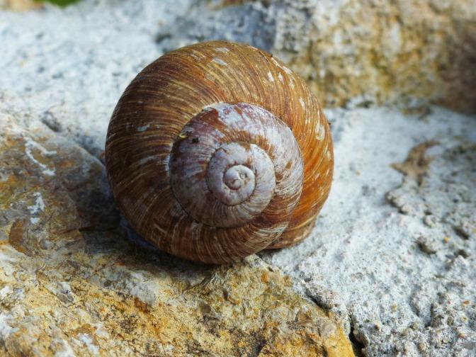 snail-1474707_1920